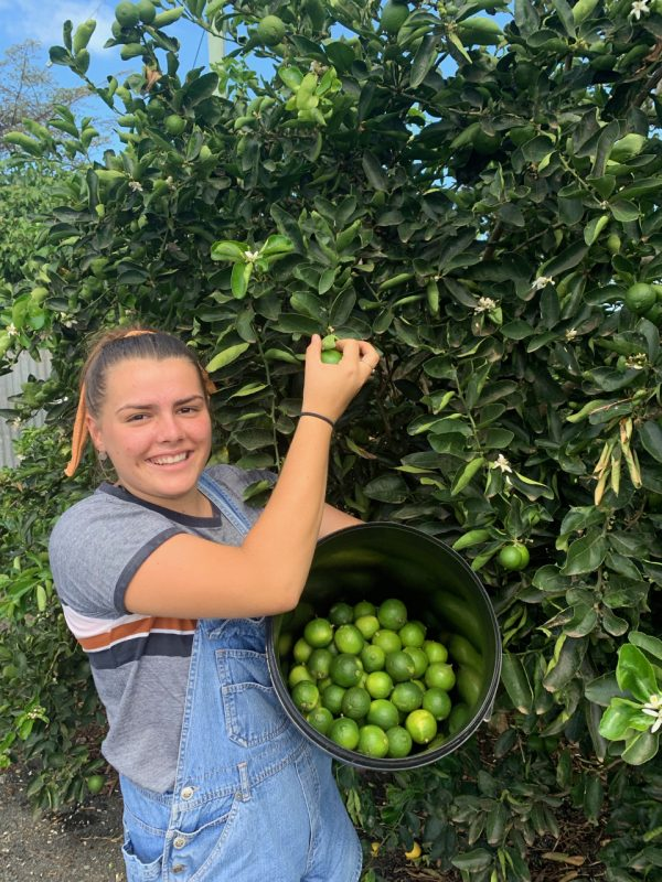 Limes for Sale